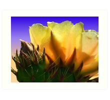Opuntia Bloom Against The Sky Art Print