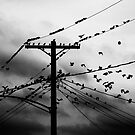 Birds by PatSchlaich