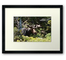 Did I Sneek Up On You? Framed Print