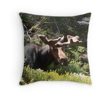 Did I Sneek Up On You? Throw Pillow