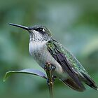 Hummingbird Close-Up by Sandy Keeton