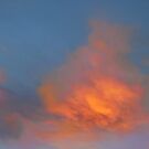 Vivid Morning  by Tori Snow