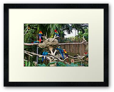 Colorful birds on a branch inside the Jurong Bird Park in Singapore by ashishagarwal74