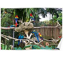 Colorful birds on a branch inside the Jurong Bird Park in Singapore Poster