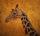 Giraffe by CarolM