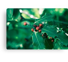 Holly bush with red berries II Canvas Print