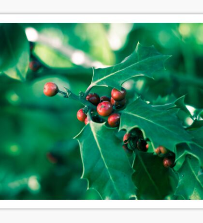 Holly bush with red berries II Sticker