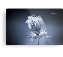Frozen wildflower Metal Print