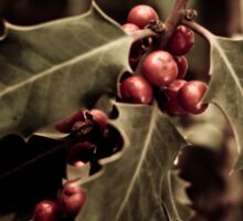 Holly bush with red berries III Sticker
