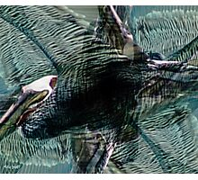 Designs Inspired By Nature: Wild Pelican Photographic Print