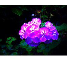 #NeinGrenze #Flowers Photographic Print