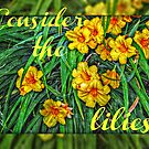 Consider the Lilies by Jane Neill-Hancock