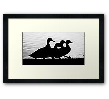 Goose Stepping Ducks Framed Print