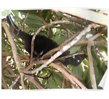 Kitten/Climbling up tree -(280812)- Digital photo Poster