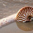Nautilis on the Beach Sunshine Coast Qld Australia by Beth  Wode