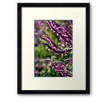 Day 259 - 365 Flowers  Framed Print