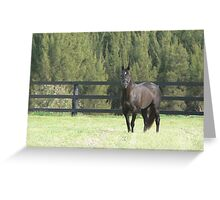 More Than Ready - champion sire Greeting Card