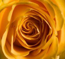 Backlit Yellow Rose Sticker