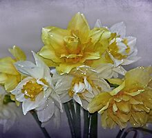 """"""" A Touch of Spring............"""" by Rosehaven"""