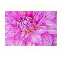 Dahlia Swoon Art Print