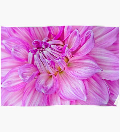 Dahlia Swoon Poster