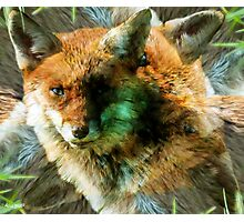 Designs Inspired By Nature: Wild Red Fox Photographic Print