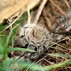 Fuzzy Caterpillar by Kelly Walker