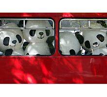 panda power Photographic Print
