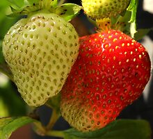 Two Strawberries by Jim Sauchyn