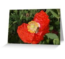 Poppy with bee Greeting Card