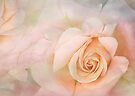 simply roses by Teresa Pople