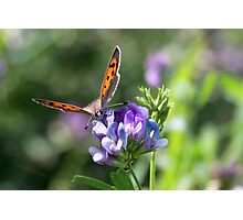 Smell the Flowers Small Copper Photographic Print