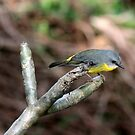 Bird by Seraphina6