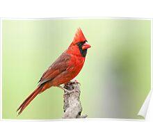 The Redbird, a Year Round Friend Poster