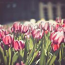 Tulip Fest by Th3rd World Order