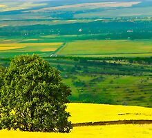 Tree in yellow field by Cristim