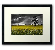 Stormy Canola Fields Framed Print