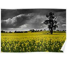 Stormy Canola Fields Poster