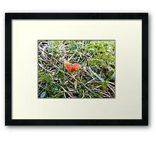Toadstools on The Towans Framed Print