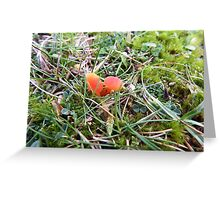 Toadstools on The Towans Greeting Card