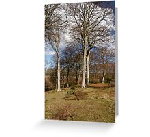 Spring at Alnwick Greeting Card