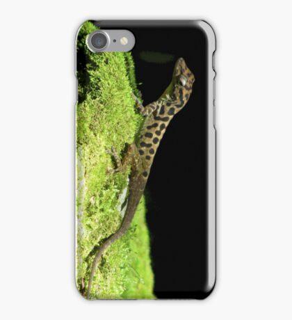 Saban Anole (Anolis sabanus) iPhone/iPod Case iPhone Case/Skin