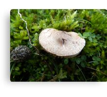 Toadstool on the Towans Canvas Print