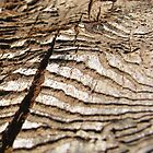Woodworm Bark iPhone/iPod Case by KimSha