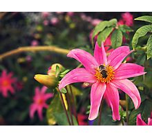 l'abeille Photographic Print