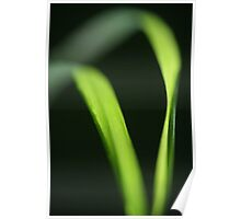 Chlorophyll calligraphy Poster