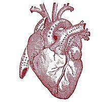Anatomically Correct Heart Photographic Print
