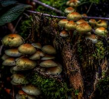Forest Funghi #2 by Andrew Pounder