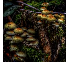 Forest Funghi #2 Photographic Print