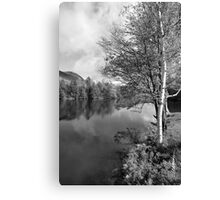 Lake Birch Trees Canvas Print